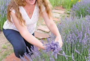 A patch of purple at Heritage Lavender in rural Berthoud