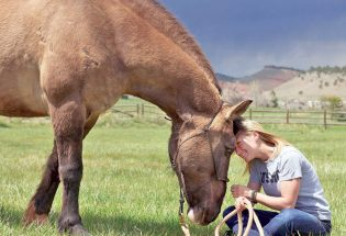 Horses with big hearts give vets hope