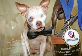 Berthoud Chihuahua is America's top dog