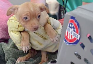63 dogs rescued from Larimer County residence