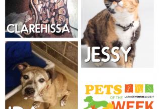 Larimer Humane Society: PETS OF THE WEEK