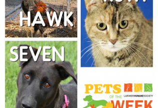 Larimer Humane Society: PETS OF THE WEEK