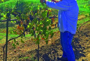 Wine country is right around the corner at Blue Mountain Vineyard