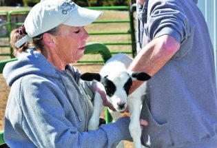 Star View Farm; Berthoud's one-stop shop for fresh food, livestock sales and farm tours