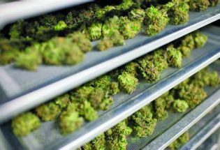 Marijuana – expanding options to patients