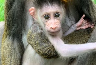New zoo babies to visit in the new year