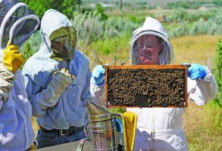 Being a Beekeeper 101