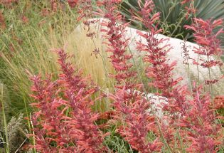 Some like it hot: Sizzlin' summer plants