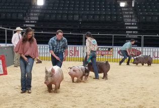 Larimer County Fair 2020 proves determination and resilience abound in 4-H community