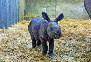 Zoo babies 2020