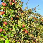 Willow Orchard Farm offers apples amidst fun activities