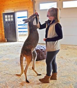 Tall Kangaroo