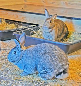 Zoo Chateau big bunnies