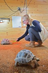 feeding tortoises